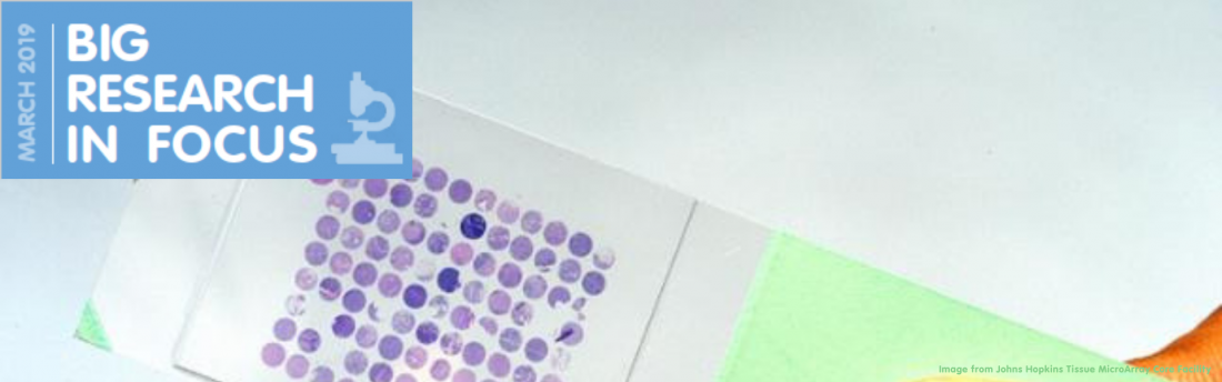 tissue microarray slide